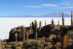 Salar de Uyuni view from Isla Incahuasi. Potosí Department. Bolivia. Isla Incahuasi is a hilly and rocky outcrop of land and former island in Bolivia situated Stock Image