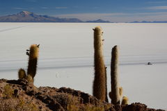 Salar de Uyuni view from Isla Incahuasi. Potosí Department. Bolivia. Isla Incahuasi is a hilly and rocky outcrop of land and former island in Bolivia situated Royalty Free Stock Photography