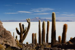 Salar de Uyuni view from Isla Incahuasi. Potosí Department. Bolivia. Isla Incahuasi is a hilly and rocky outcrop of land and former island in Bolivia situated Stock Photos