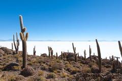Salar de Uyuni view from Isla Incahuasi Royalty Free Stock Images