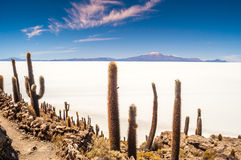 Salar Royalty Free Stock Images