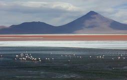 Salar lake Royalty Free Stock Images