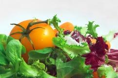 Salat. Lizenzfreies Stockbild