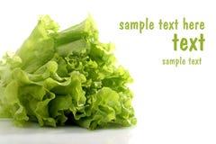 Salat. Royalty-vrije Stock Afbeeldingen