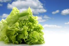 Salat. Stock Images
