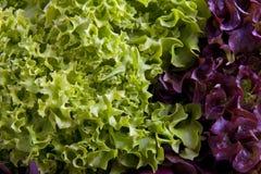 Salat Royalty-vrije Stock Afbeeldingen