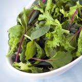 Salat-Blätter Lizenzfreie Stockfotos