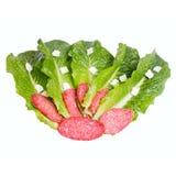 Salat Blätter und sousage Lizenzfreies Stockbild