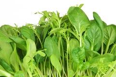 Salat-Blatt-Auswahl stockbilder