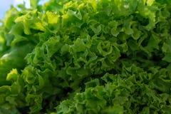 Salat an den Landwirten vermarkten, schließen oben, selektiver Fokus Lizenzfreie Stockfotografie