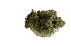 Salat der roten Koralle im Korb Lizenzfreie Stockfotos