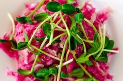 Salat des roten Rettichs und der frischen Sonnenblumensprösslinge lizenzfreie stockfotografie