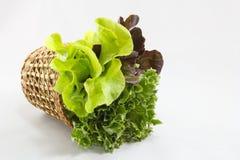 Salat-Hintergrund stockbild