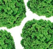 Salat lokalisierte auf Weiß stockbilder