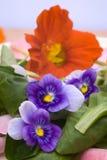 Salat mit Blüten Stockfoto