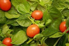 Salat mit Kirschtomaten stockfotos
