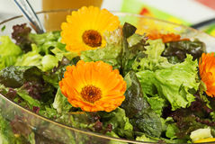 Salat mit Ringelblume Stockbilder