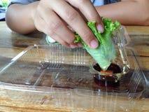 Salat rollt im klaren Plastikkasten Lizenzfreies Stockbild