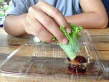 Salat rollt im klaren Plastikkasten lizenzfreie stockbilder