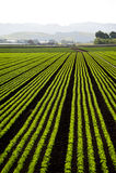 Salat-Schüssel Lizenzfreie Stockfotografie