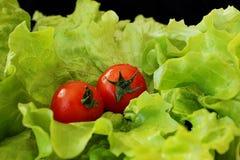 Salat und Tomaten auf schwarzem Hintergrund Stockbilder