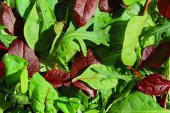 Salatblatt-Mischung rucola Lizenzfreies Stockfoto