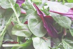 Salatblatt-Mischung rucola Lizenzfreies Stockbild