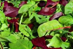Salatblatt-Mischung rucola Stockfotografie