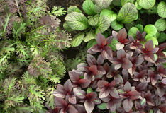 Salatmischung Lizenzfreies Stockfoto