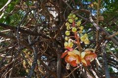 Salavan floresce o símbolo do buddhism fotografia de stock royalty free