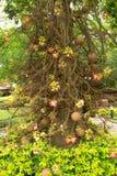 Salavan tree and flowers. The Buddhists believe that Buddha was born under the Salavan tree Stock Photos
