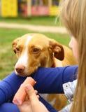 Salchicha de la parte de la muchacha con el perro Imagenes de archivo