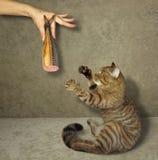 Salchicha del gato y de los pescados foto de archivo libre de regalías