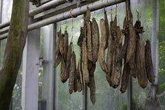 Salchichas secadas Fotos de archivo