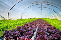 Sald in a greenhouse Stock Photos