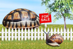 For Sale. Property market: A snail considers buying a new, larger home (shell) after noticing the For Sale sign on the tortoise shell Royalty Free Stock Photo