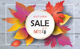 Sale Autumn leaves wooden background. Autumn Sales banner, Fall Sale Vector illustration. Fall sales season poster with realistic drawing maple leaves, leaf fall stock illustration