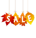 Sale autumn Royalty Free Stock Photo