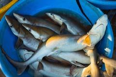 Sale av hajar i marknaderna av olika städer av Goa Arkivbilder