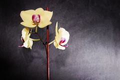 Sale av orkidér buy royaltyfri bild