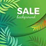 Sale background with green leaves in realistic design. Vector illustration. Summer poster with tropical branches, discounts concept Stock Image