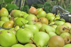 Sale boxes with pears Stock Images