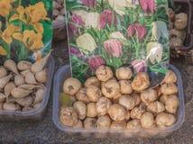 Sale bulbs Fritillus meleagris and Iridodictyum reticulata bulbs Royalty Free Stock Photography