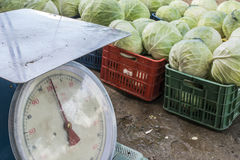 Sale cabbage in the market Stock Images