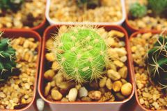 Sale of cactuses in the Flower market stock image