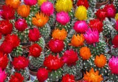 Sale of cactuses of various grades in the Flower market. stock photo