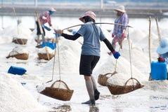 Sale che coltiva in Tailandia Immagini Stock
