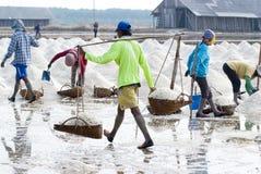 Sale che coltiva in Tailandia Fotografia Stock