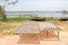 Sale del pesce dei pesci essiccati asciutto sulla griglia del ferro Fotografia Stock Libera da Diritti