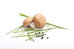 Sale e pepe crudi del wie del fungo del fungo prataiolo su fondo bianco Fotografia Stock